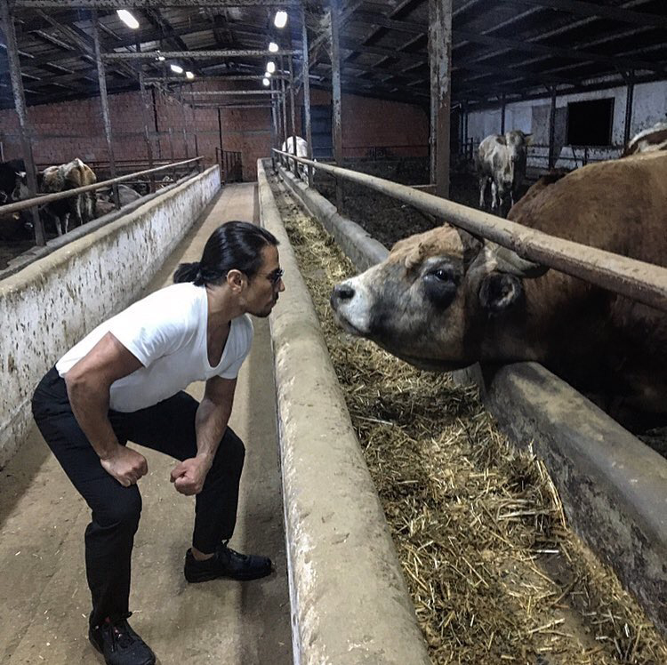 Saltbae faces a cow at his cattle farm